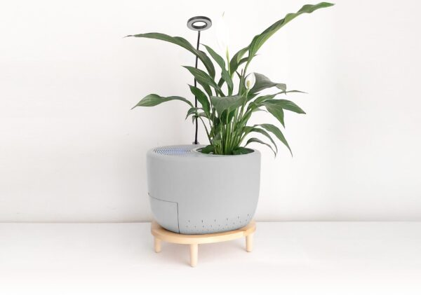 air purifier with wooden stand and plant